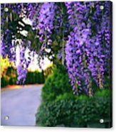 Wisteria At Sunset Acrylic Print