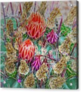 Withering Beauty Acrylic Print