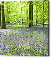Wonderful Woodland Acrylic Print