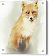 Woodland Fox Portrait Acrylic Print
