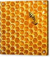 Working Bee On Honeycells Acrylic Print