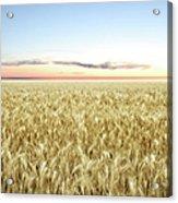 Xxl Wheat Field Twilight Acrylic Print