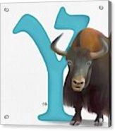 Y Is For Yak Acrylic Print