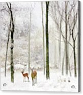 Forest Winter Visitors Acrylic Print