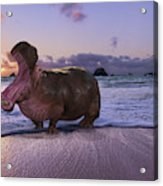 Yawning Coastal Hippo Hello Acrylic Print