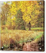 Yellow Forest Acrylic Print