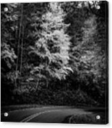 Yellow Tree In The Curve In Black And White Acrylic Print