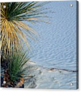 Yucca Plant In Rippled Sand Dunes In White Sands National Monument, New Mexico - Newm500 00113 Acrylic Print