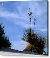 Yucca Plant In Rippled Sand Dunes In White Sands National Monument - Newm500 00107 Acrylic Print
