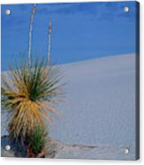Yucca Plant In Sand Dunes In White Sands National Monument, New Mexico - Newm500 00112 Acrylic Print