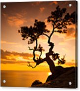 Zen Is A Tree On The Cliff Rocks And Acrylic Print