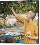 Young woman picking apples Acrylic Print