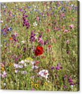 Mixed colourful wildflowers Acrylic Print