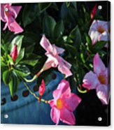 A Pink Trumpet of Light Acrylic Print