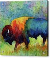 American Buffalo III Acrylic Print