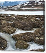 Artic Vegetation And Snow Pattern In The Foreground And Snowy Mountains In The Background Acrylic Print