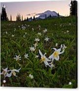 Avalanche Of Lillies Acrylic Print