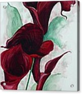 Black Callas Acrylic Print