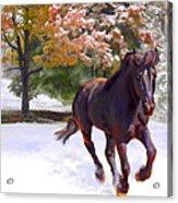 Black Stallion In Fall Snow Fantasy Art Acrylic Print