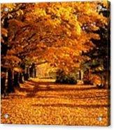 Blazing Autumn Oaks Acrylic Print