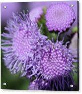 Blue Mink Bouquet  Acrylic Print