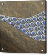Blue Pattern on Brown Background Acrylic Print