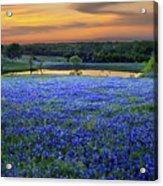 Bluebonnet Lake Vista Texas Sunset - Wildflowers landscape flowers pond Acrylic Print