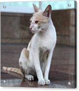 Cat Sitting On Marble Floor Acrylic Print