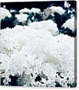 Close Up Of White Plant Acrylic Print