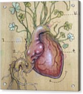 Clover Heart Acrylic Print