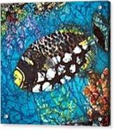 Clown Triggerfish Acrylic Print
