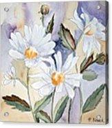 Daisy Days Acrylic Print