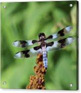 Dragonfly Daydream Acrylic Print