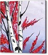 Early Fog Autumn Birch Trees  Acrylic Print