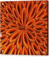 Face Mask Orange Acrylic Print
