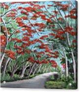 Flamboyanes Acrylic Print