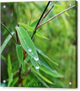 Forty Shades Of Green Acrylic Print