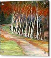 Grafton Birches Acrylic Print