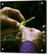 Hands form a palm leaf into a small work of art Acrylic Print