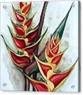 Heliconia Tropicana Trinidad Acrylic Print