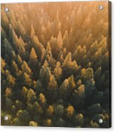 High Angle View Of Trees In Forest Acrylic Print