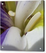 Inner Connection Colorful Lily  Acrylic Print