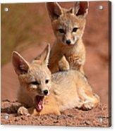 Kit Fox Twin Pups Acrylic Print