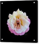 Laughing Rose Acrylic Print