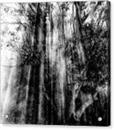 Light beams through tree in monochrome Acrylic Print