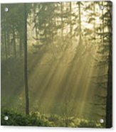 Light from Heaven Acrylic Print