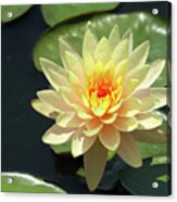 Lovely Yellow Water Lily Acrylic Print
