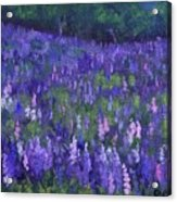 Lupine Tapestry Acrylic Print