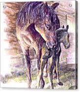 Maternal Bond Five Hours Old Arabian Mare With Newborn Foal Acrylic Print