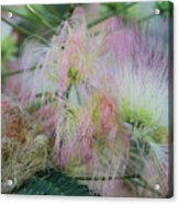 Nature's Pink Fireworks Acrylic Print